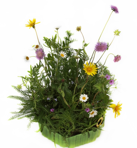Sellana Honey Meadow Wildblumen-Initialziegel